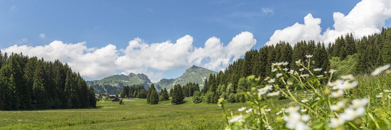 Panoramic visual Praz-De-Lys - Sommand